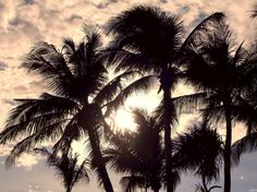 """Near Sunset"" by Dietmar Scherf ... #sunset #palmtree #art #island #tropical #vacation #relaxation #romance"