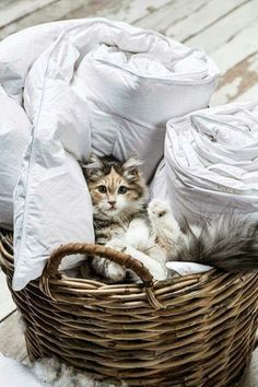 "Kitty in a basket""....."