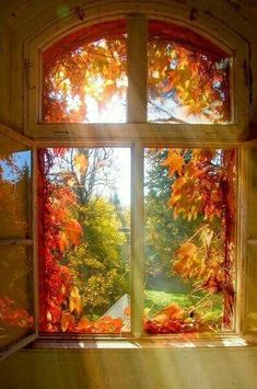 Fall Pictures, Nature Pictures, Beautiful Pictures, Autumn Photos, Autumn Lights, Autumn Scenery, Window View, Open Window, Through The Window