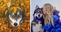 I Rescued A Husky And Later He Saved Me From An Abusive Relationship   Bored Panda