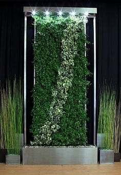 Living Walls | Debbie Travis' Official Site