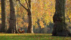 St James Park - London United Kingdom (UK)