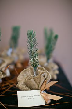 Wedding take away idea - environmental and timeless keepsake, inexpensive and thoughtful do it yourself idea