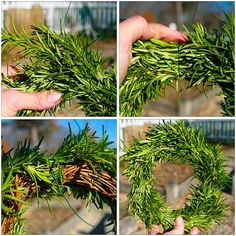 How to make a rosemary wreath. I have TONS of rosemary. I will make this for my kitchen window! Christmas And New Year, Christmas Holidays, Christmas Wreaths, Christmas Decorations, Xmas, Christmas Stuff, Christmas Ideas, Fall Wreaths, Winter Holidays