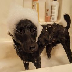 Bath time!!! http://ift.tt/2bmKBbx