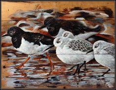 Strandvogelsalijst [1600x1200]