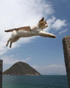防波堤の切れ目を華麗なジャンプで自由自在に移動する島の猫