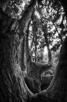 ~~Boughs Within Boughs | mono treescape, Seattle Volunteer Park, Washington | by Gabriel Tompkins~~