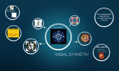 5th grade radial symmetry.