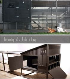 modern chicken coops