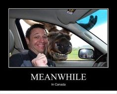 Because approaching a moose is exactly what you want to do...