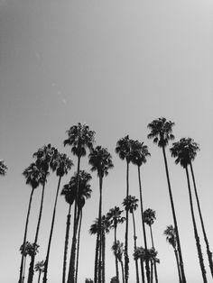 Palm trees | kamrynn | VSCO