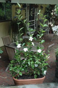 """This trellis provides ideal support for clematis, roses, sweet peas, and morning glories. Use it directly in the ground or in a large trough to create """"living screens"""" or to beautify bare walls or fences. #gardening #patio #backyard"""