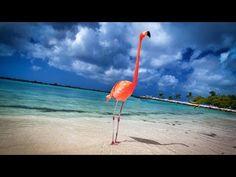 Aruba: 19 Miles of Happiness - 4K ... video ... http://snip.ly/iu2z3