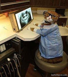 38md:    Cat Dentist, lolz!