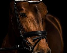 """Check out new work on my @Behance portfolio: """"Equine Photography"""" http://be.net/gallery/48043753/Equine-Photography"""
