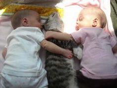 Tiernas fotos de bebes en compañía de gatos