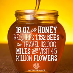 Amazing information about bees :)