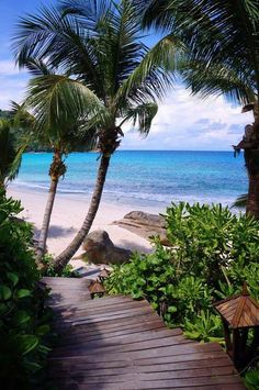 20 most beautiful islands in the world. From French Polynesia to the Caribbean, here are the best islands in the world to visit. Beautiful Islands, Beautiful Beaches, Beautiful World, Dream Vacations, Vacation Spots, Italy Vacation, Les Seychelles, Seychelles Beach, Seychelles Islands