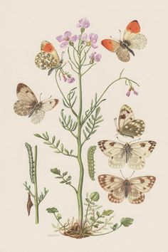 1956 Butterflies Antique Print Vintage Lithograph by Craftissimo, €13.95