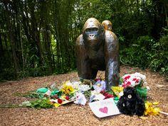 Harambe le gorille de Cincinnati qui divise les Etata-Unis