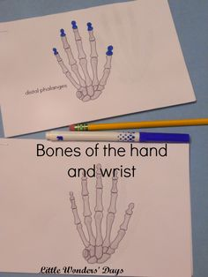 Montessori inspired mini book, bones of the hand and wrist via Little Wonders' Days