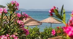 Prachtig blauwe zee door de roze bloemen heen in Bodrum.