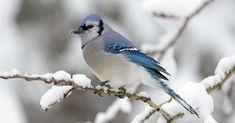 In der kalten Jahreszeit freuen sich Vögel über etwas Nahrung. Wir zeigen dir wie du leicht Vogelfutter herstellst und schön im Garten / am Balkon anbietest