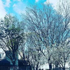 Blooming blue boom  . . . . . . #paris #france #igersparis #igersfrance #blooming #tree #flowers #sky #blue #saturday #love #picoftheday #photooftheday #huffpostgram #vsco #photography #parismaville