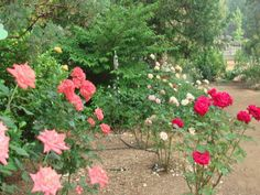 The Rose Garden. A beautiful place to hang out, take photos, and drink tea (or wine) :)
