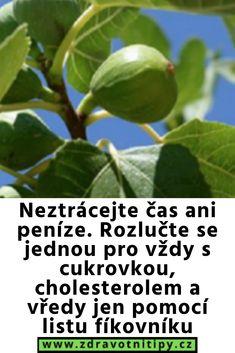 Jena, Diabetes, Plant Leaves, Health, Fitness, Plants, Salud, Health Care, Flora