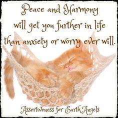Aww. Kitty and his hammock! #peace #harmony :)