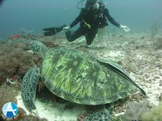 Worst Scuba Diving Mistakes and How to Fix Them Cebu, Scuba Diving, All Pictures, Mistakes, Asia, Travel, Diving, Viajes, Destinations