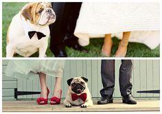 #dogwedding #weddingwithdog #petwedding