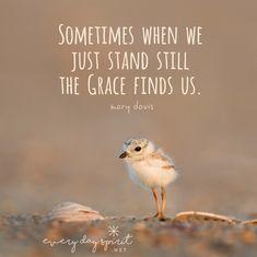 Grace is here. xo Get the app of inspiring wallpapers at ~ www.everydayspirit.net xo #grace #bird #sea #stillness