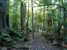 New Zealand. I'll be hiking through this forest soon enough!