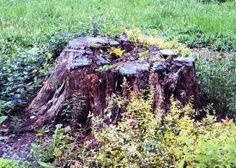 Загонетка у дрвеним круговима? - http://www.vaseljenska.com/drustvo/zagonetka-u-drvenim-krugovima/