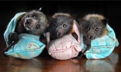 Adorable little baby bats! (I know I have issues. So do you! Quit judging me! lol)