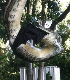 The bat's wings can be seen protruding from the three-metre-long reptile's contorted jaws as it attempts to swallow the flying mammal Python, Badass Pictures, Random Pictures, Vida Animal, Reptiles And Amphibians, Animal Memes, Animal Kingdom, Pet Birds, Animals And Pets