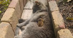 Cat Becomes Friends With A Chipmunk, Won't Stop Cuddling   Bored Panda