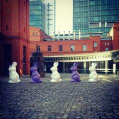 @Angie Smith Browar i kicające zajączki po Dziedzińcu :)   #poznan #poland #swieta