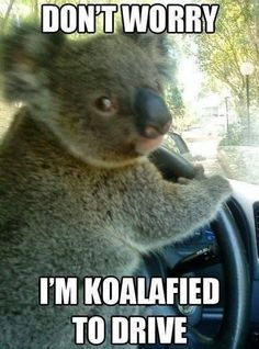 I'm riding with this guy! You must see these hilarious car memes! Click for more. #lol #spon