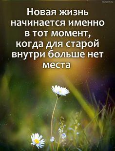 Новая жизнь начинается именно в тот момент, когда для старой внутри больше нет места  #весна #ромашки #вдохновение #мотивация #природа New Me, The Dreamers, Positive Quotes, Psychology, Wisdom, Positivity, In This Moment, Motivation, Reading