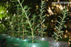 backyard designs – Gardening Ideas, Tips & Techniques Flora Garden, Garden Art, Garden Design, Garden Trees, Garden Plants, Zen, Farm Gardens, Medicinal Herbs, Green Life