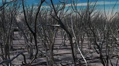 In this Maya 2016 tutorial I will show you how to create a forest using XGEN. This video is inspired by an excellent tutorial made by Steven Roselle ( Here t...