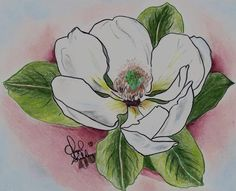 flower drawings | Magnolia Drawing by Cheryl Shibley - Magnolia Fine Art Prints and ...