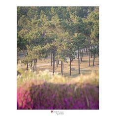 Enjoy a walk here. Vineyard, Surfing, Villa, Sunset, Gallery, Outdoor, Outdoors, Roof Rack, Vine Yard