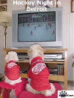Detroit Red Wings dogs