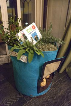 Our Potato Planter in Seastruck being used as a herb planter on top