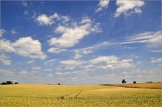 Wheat field and cloudy sky Posters by Pirmin Nohr agriculture blue cereal clouds field golden landscape sky tree trees Fields & Agriculture Summer